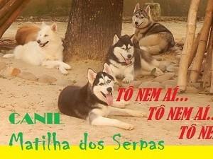 CANIL MATILHA DOS SERPAS