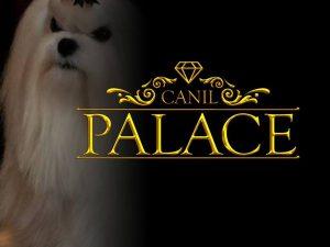 Canil Palace Animal