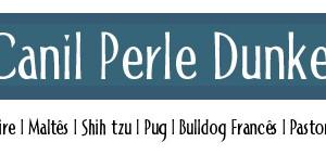 Canil Perle Dunkel - ShihTzu