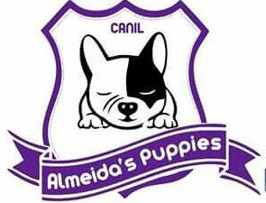 Canil Almeida´s Puppies - Bulldog Francês
